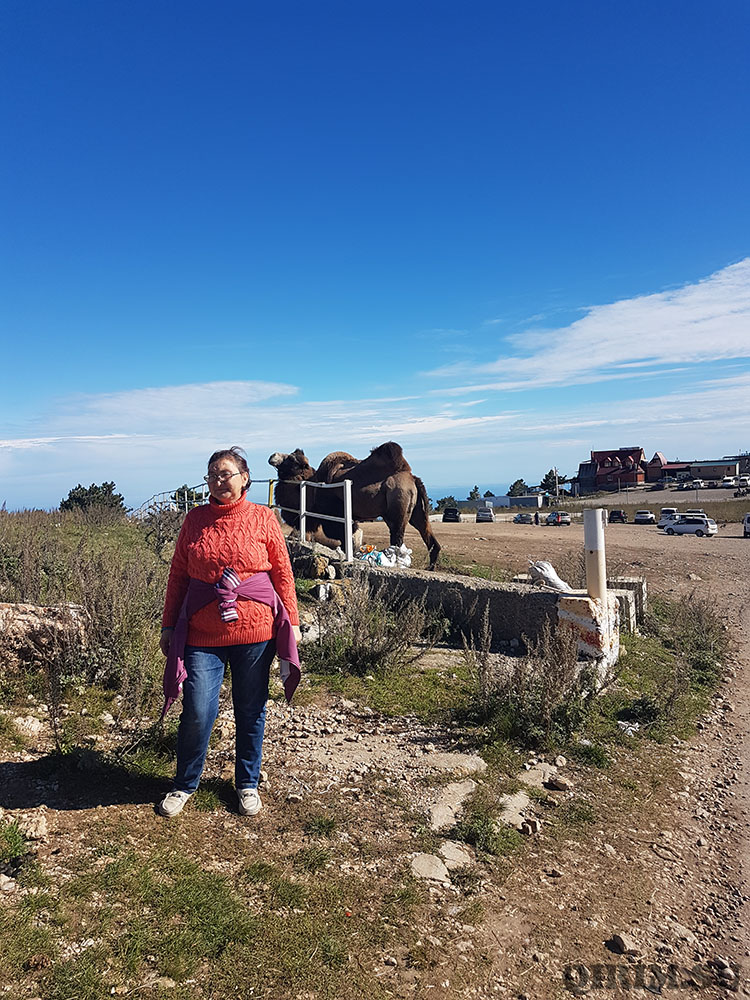 Ай-Петри катание на лошадях и верблюдах