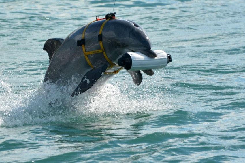 Центр по подготовке боевых дельфинов