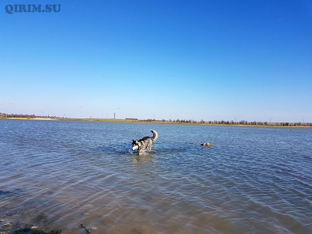 озеро Джарылгач Крым