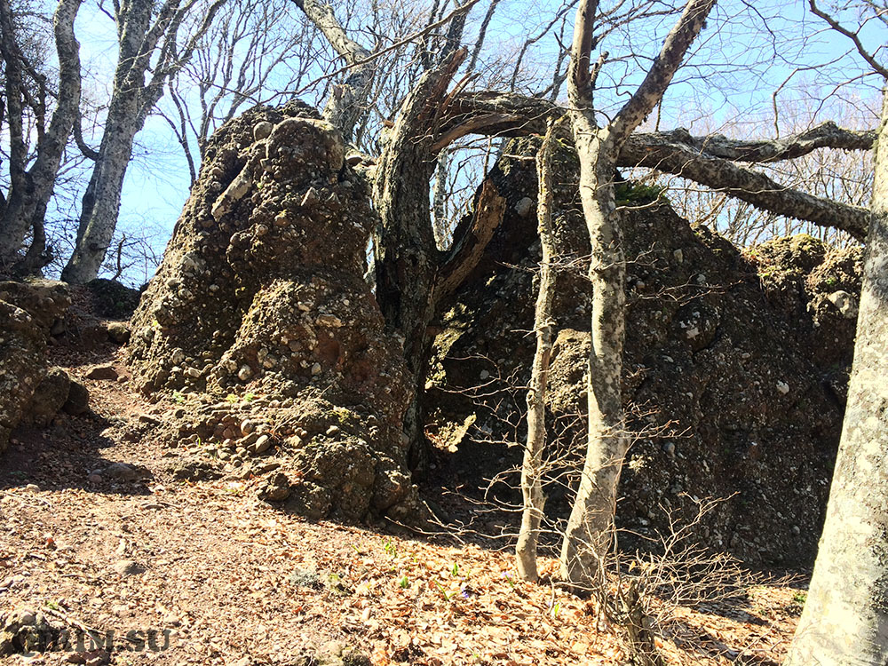 Кудрявая Марья дерево разбило скалу