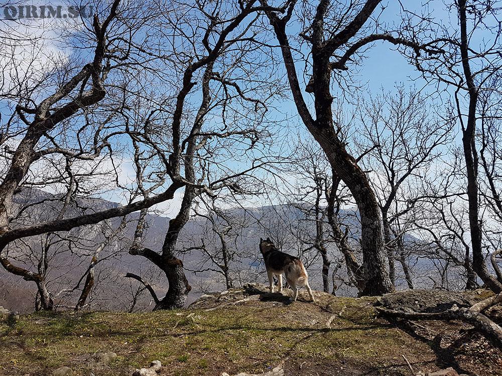 Пахкал Кая открывающиеся виды по дороге на гору
