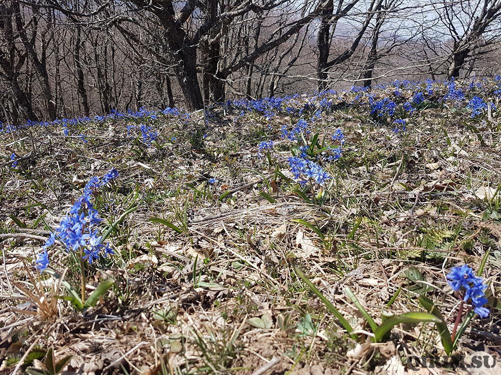 поляна цветов на Кудрявой Марье