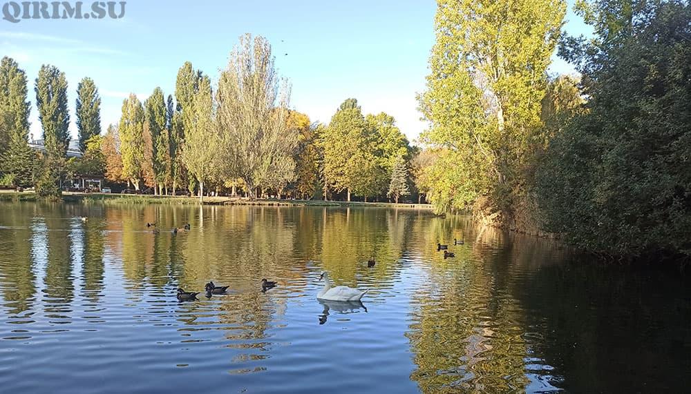 Ставок на гагаринском парке в Симферополе