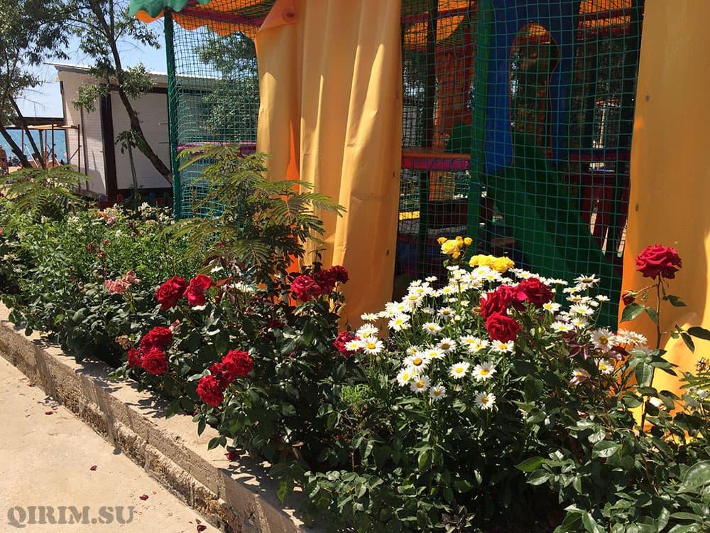 Орловка цветы