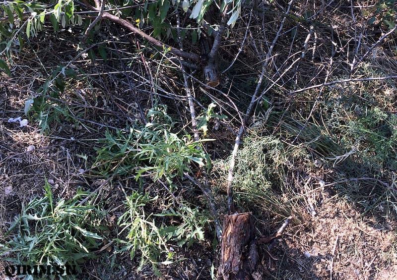 Новофедоровка срубленные деревья