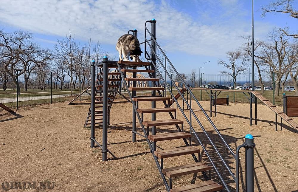 Парк Учкуевка площака для собак лестницы