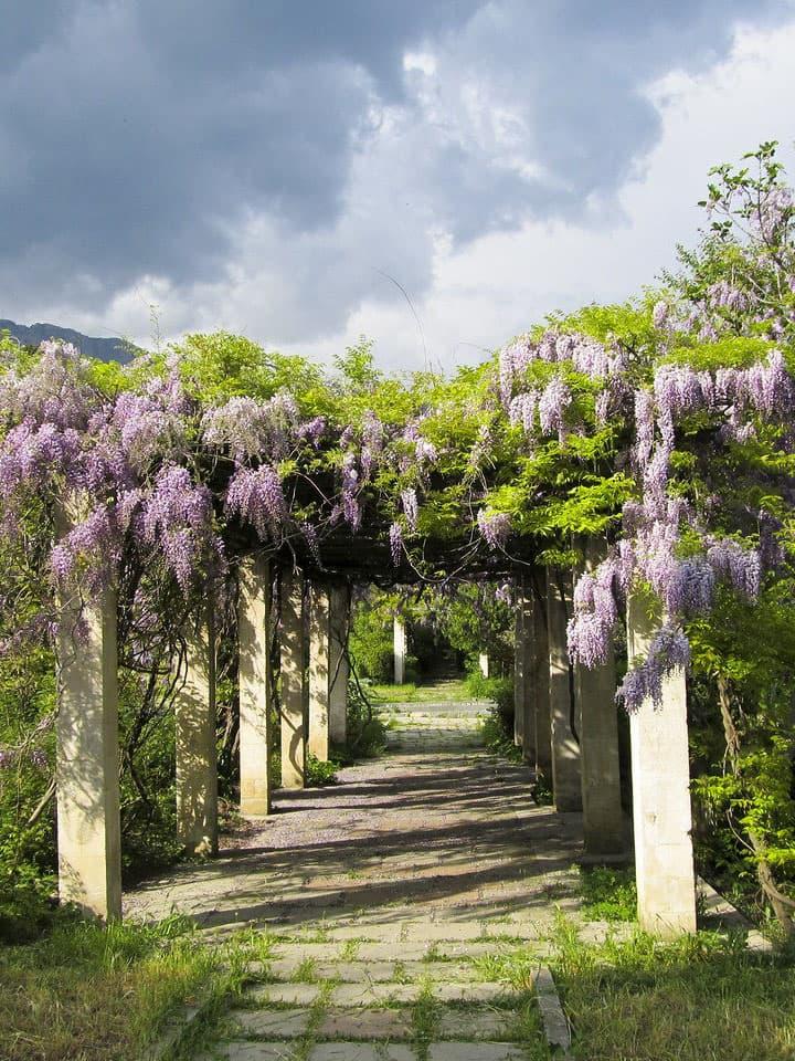 Сады в Симеизе