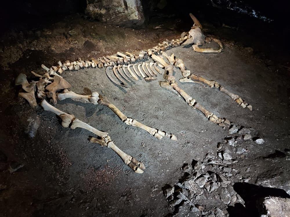 Эмине-Баир-Хосар скелет