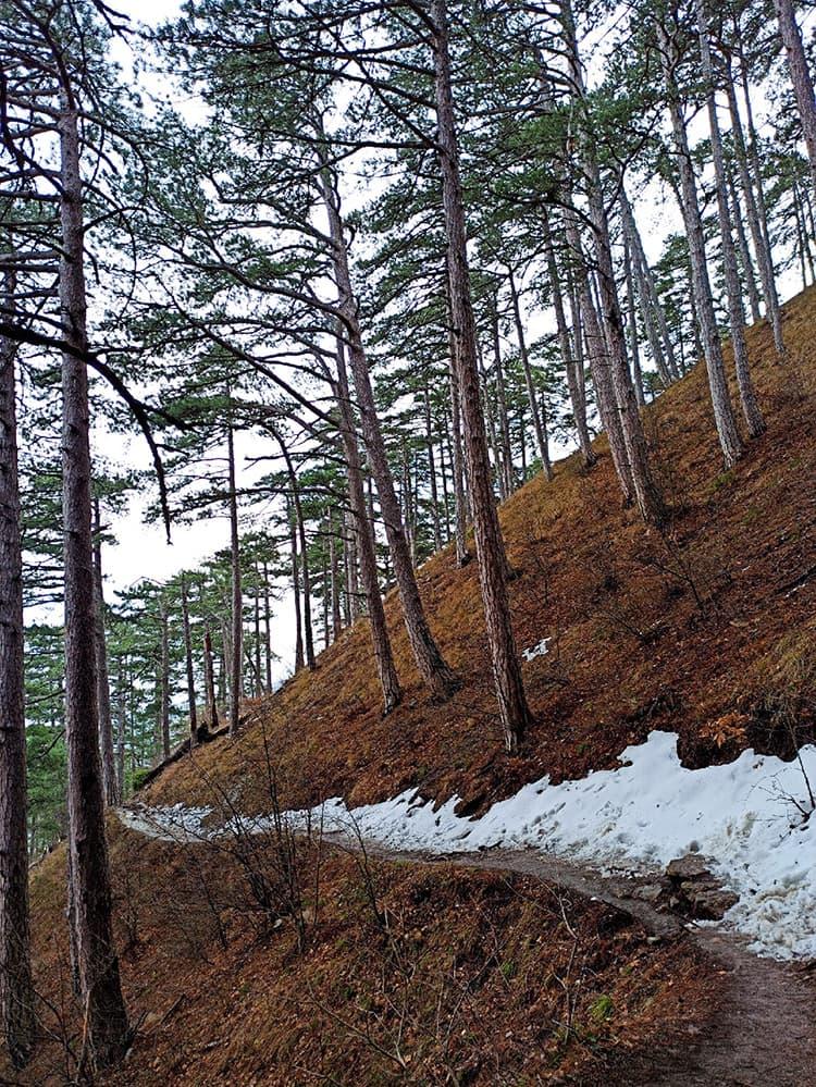 Штангеевская тропа зима
