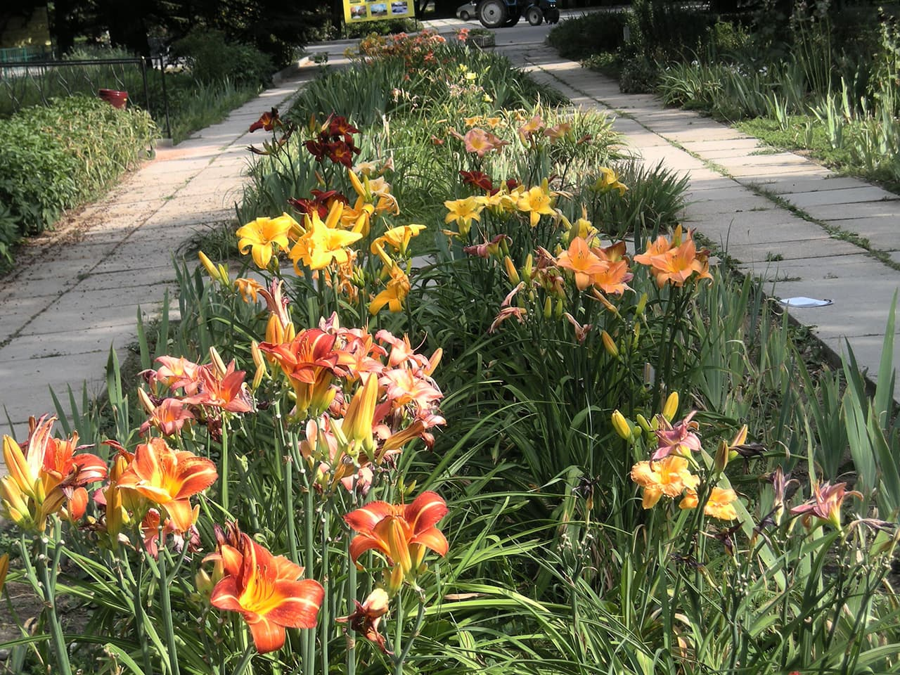 Иридарий в Ботаническом саду в Симферополе