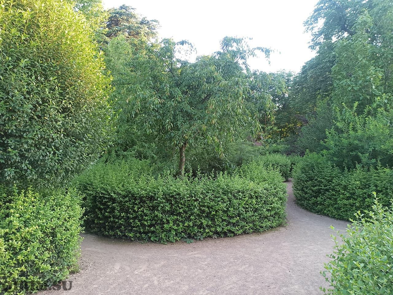 Лабиринт Ботанический сад в Симферополе 3