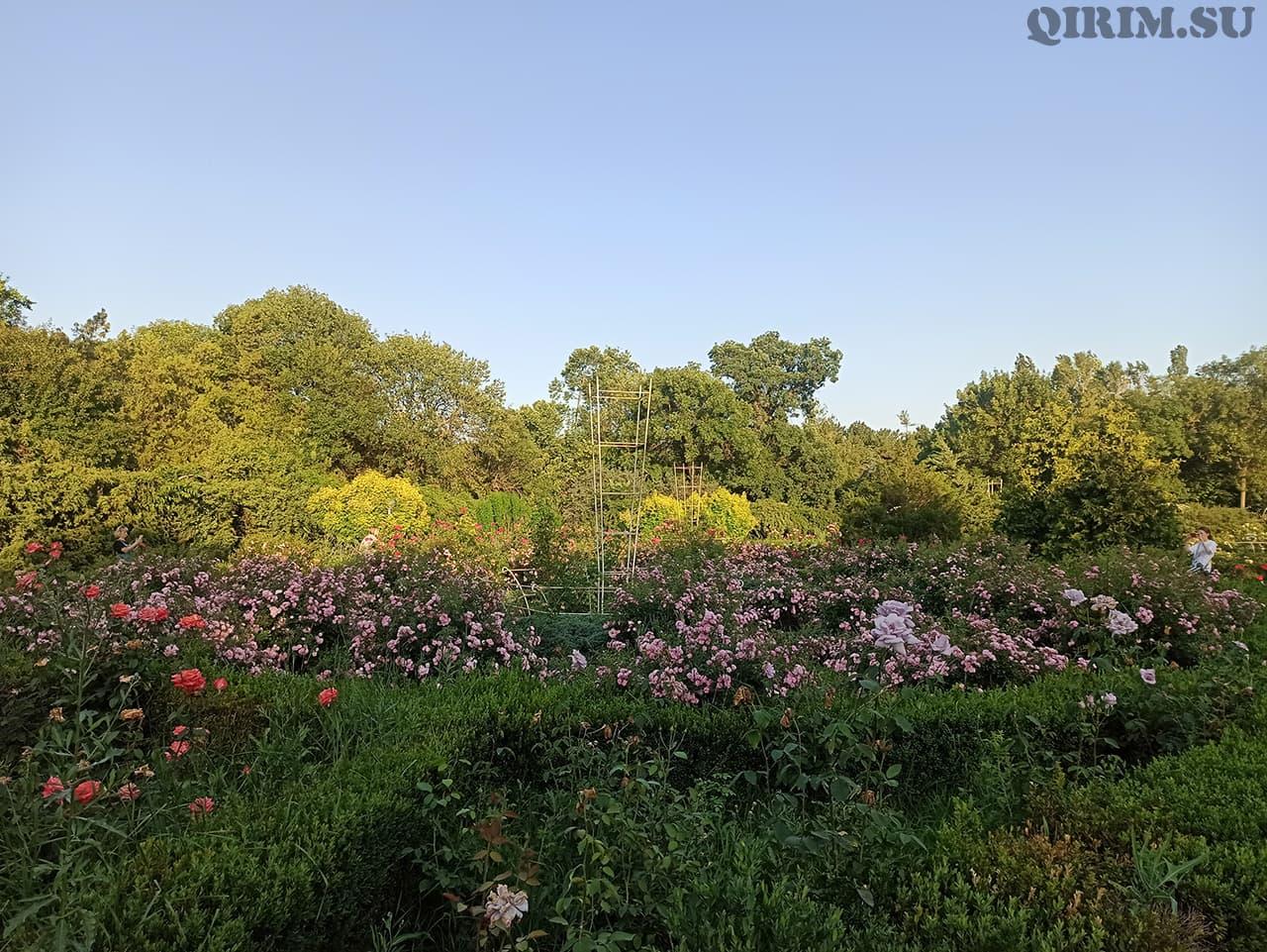 Розарий в Ботаническом саду в Симферополе 2