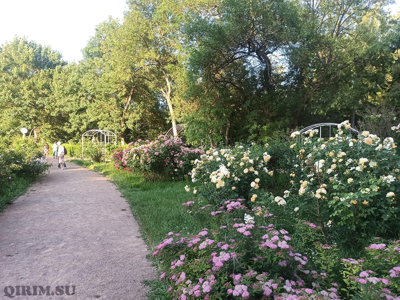 Розарий в Ботаническом саду в Симферополе 3